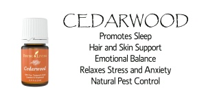 cedarwood info 2 copy