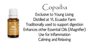 Copaiba-tree-sm 2 copy