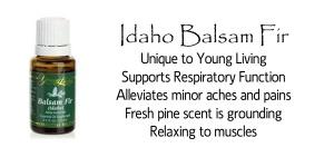 Idaho balsam fir info 2 copy