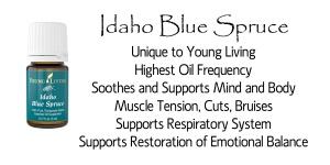 idaho-blue-spruce 2 copy